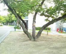 枝分かれする方が良いのか一つの事に集中するべきか…